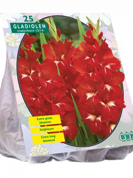 Gladiolus Traderhorn (rode gladiool)