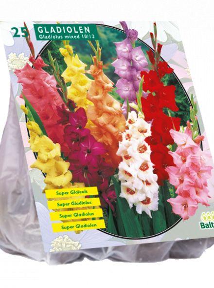 Gladiolus Gemengd per 25