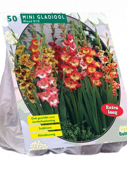 Gladiolus Miniatuur Gemengd per 50