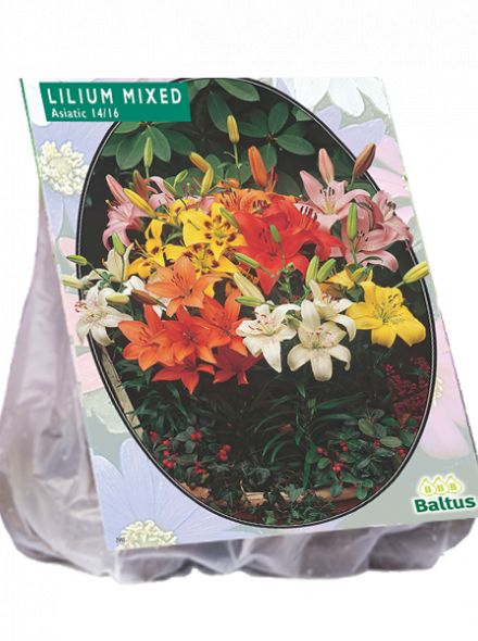 Lilium Mix (lelie mix)