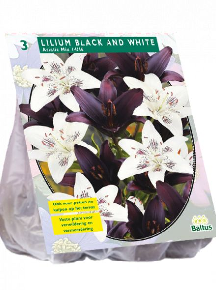 Lilium Black and White (mix van zwarte en witte lelies)