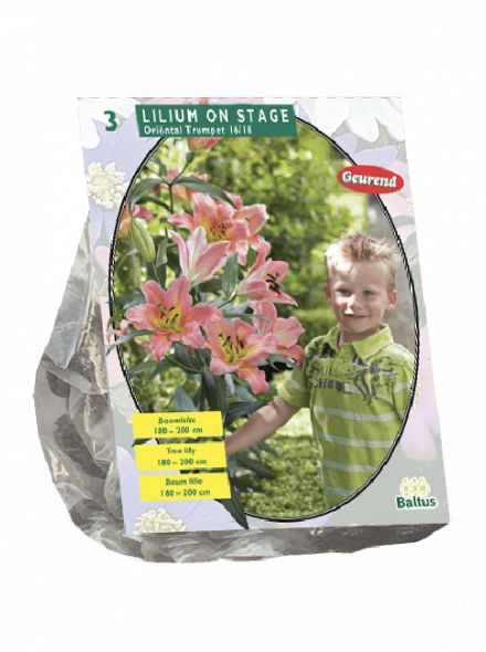 Lilium On Stage (roze Boomlelie)