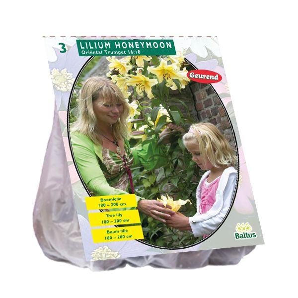 Lilium Honeymoon (gele Boomlelie)