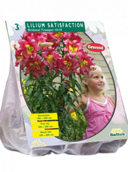Lilium Satisfaction (rode Boomlelie)