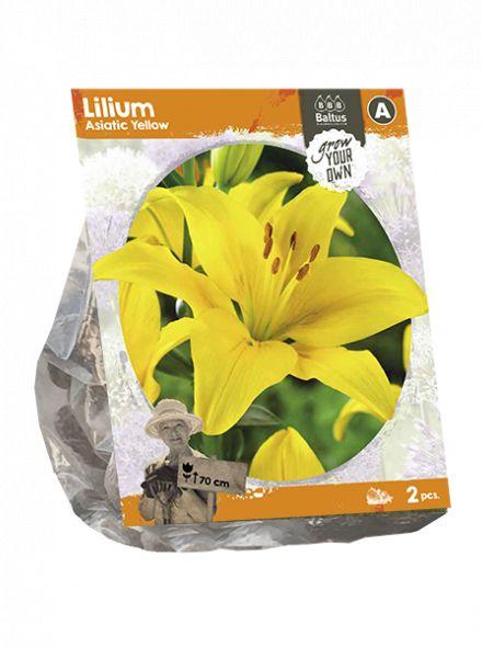 Lilium Asiatic Yellow (gele Aziatische lelie)