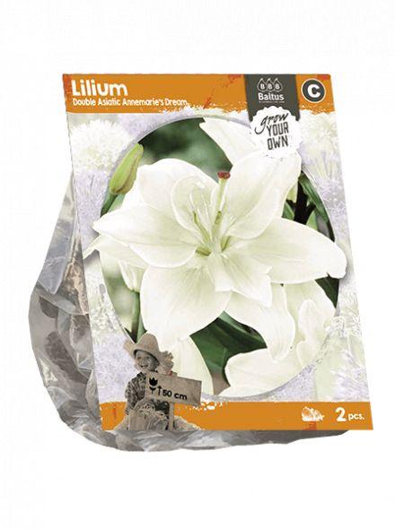 Lilium Double Asiatic Annemarie's Dream (dubbel bloemige crème witte Aziatische lelie)