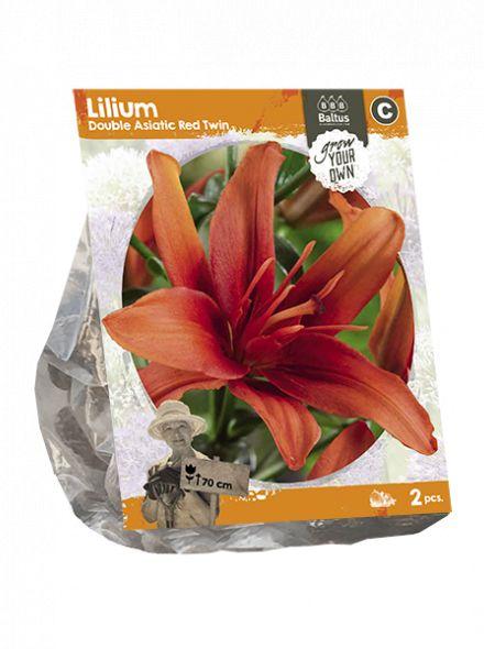 Lilium Double Asiatic Red Twin (rood oranje dubbel bloemige Aziatische lelie)