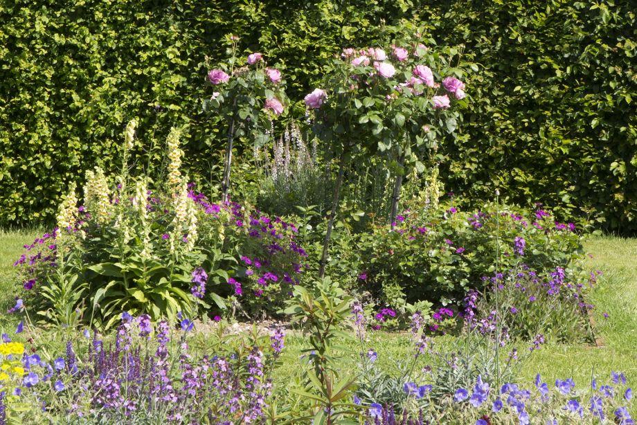 Engelse border met rozen
