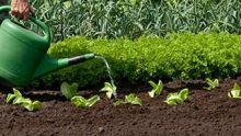 DCM Ecoterra kwaliteitspotgronden