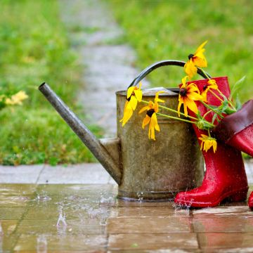 Alles wat je moet weten over wateropvang in jouw tuin!