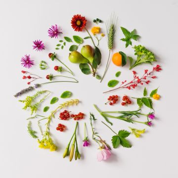 Hoe belangrijk is de kleur van je plant?