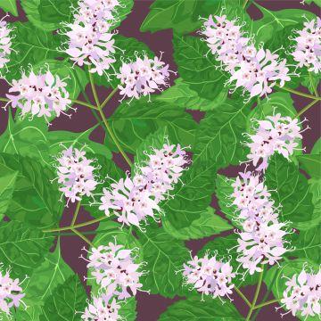 Hoe verzorg je een Patchoeli plant