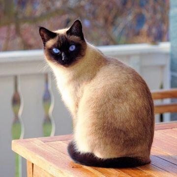 Kattenoverlast: voorkomen en verjagen