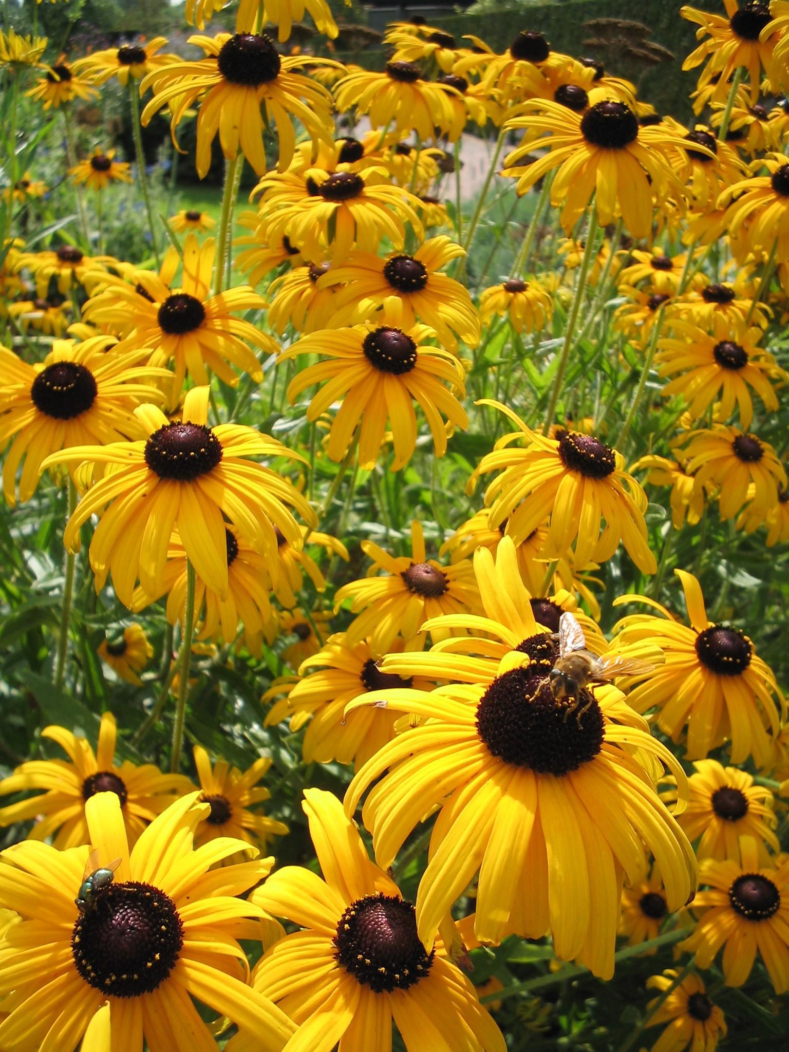 tuinplant met gele bloemen