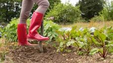 Ondergrond voor beplanting