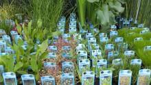 Vijver aanplanten