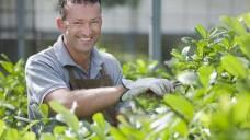 Onderhoud per tuinonderdeel