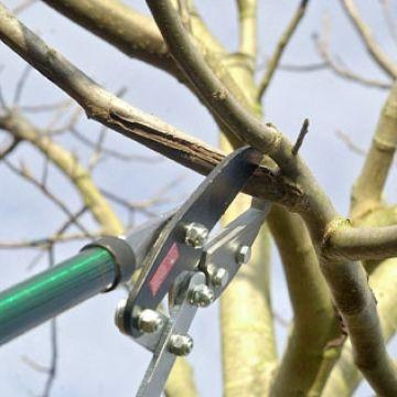 Snoeiregels: Bomen