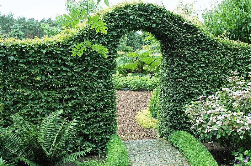 snoeiregels hagen en haagjes de tuinen van appeltern. Black Bedroom Furniture Sets. Home Design Ideas