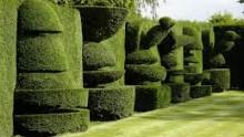 Snoeiregels: Topiary en vormsnoei