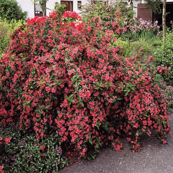 Struiken Met Bloemen Voor In De Tuin.Snoeiregels Struiken De Tuinen Van Appeltern