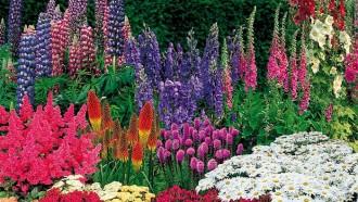 Snoeiregels: Vaste Planten