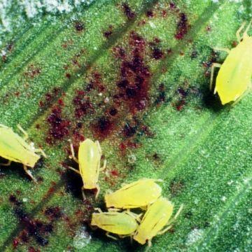 Ziektes en plagen bestrijden