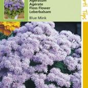 Ageratum houstonianum mexicanum Blue Mink