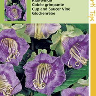 Cobaea scandens (zaad Klokwinde, Violetblauw)