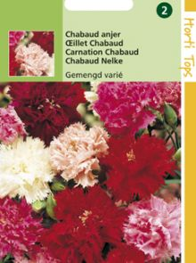 Dianthus caryophyllus gemengd