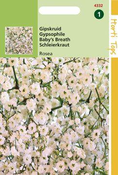 Gypsophila elegans Gipskruid diep roze