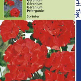 Pelargonium f1 hybride Sprinter  oranje rood