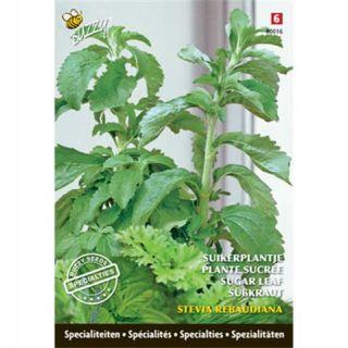 Suikerplantje Stevia Rebaudiana
