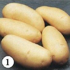 Annabelle pootaardappelen (1 kg, Annabelle is een vastkokende vroege aardappel)
