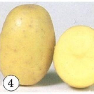 Finka pootaardappelen (5 kg, Finka is een vroege vrij vastkokende tot licht kruimige aardappel, frietaardappel)