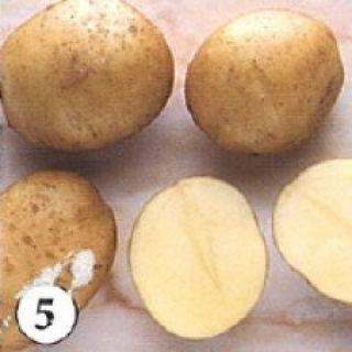 Frieslander pootaardappelen (1 kg, Frieslander is een goede consumptie- en frietaardappel)