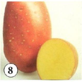 Laura pootaardappelen (1 kg. Middenvroege, roodschillig, lichtkruimige consumptie-, frietaardappel)