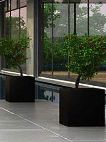 Christina (betonnen plantenbak 50x50x50 cm)