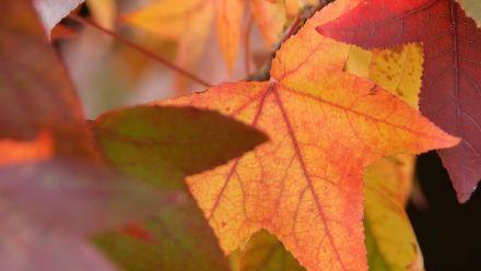 Tuinplanten met herfstkleuren (Bomen en struiken die in de herfst mooi verkleuren)