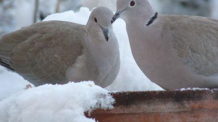 Vogelhuisjes, nestkastjes en Vogelvoederhuisjes