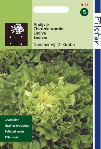 Andijvie nummer vijf (pillenzaad, Cichorum endivia)