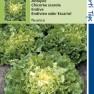 Andijvie Nuance (zaad Cichorium endivia)