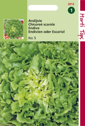 Andijvie Nummer Vijf (zaad Cichorum endivia)