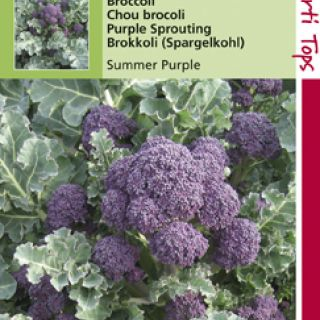 Broccoli Summer Purple (paarse zomerbroccoli 1 gram)