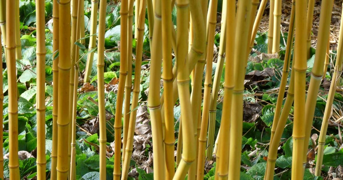 Bamboe parket vloer duurzaam en ecologisch floorhouse be