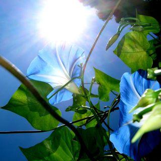 BLUE  100 x 100 cm