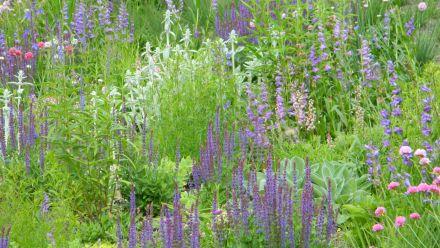 The easy Prairiegarden vaste planten concept