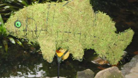 Dieren in en om het water - mosdieren