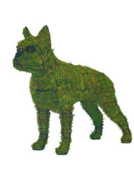 Boston terrier 50x58x20 cm met mos