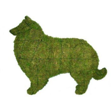 Collie - Schotse herder 80x103x30 cm met mos